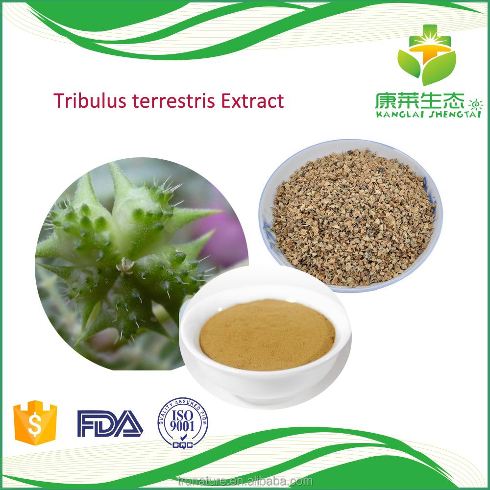 Layanan Oem Kapsul Ekstrak Tribulus Terrestris Infertilitas Pria Bubuk Murni Peningkat Testosterone Perbaikan Buy Product On Alibabacom