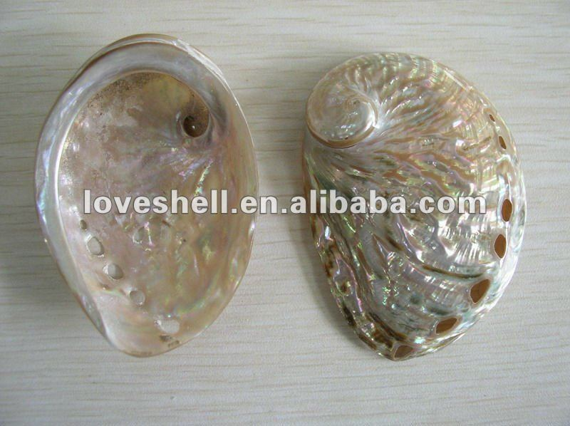 polished abalone shell