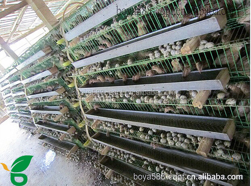 6 Tiers Quail Cage Philippines For Quail Laying With Water