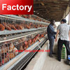 Direct factory laying hen equipment large animal cage for sale made in China