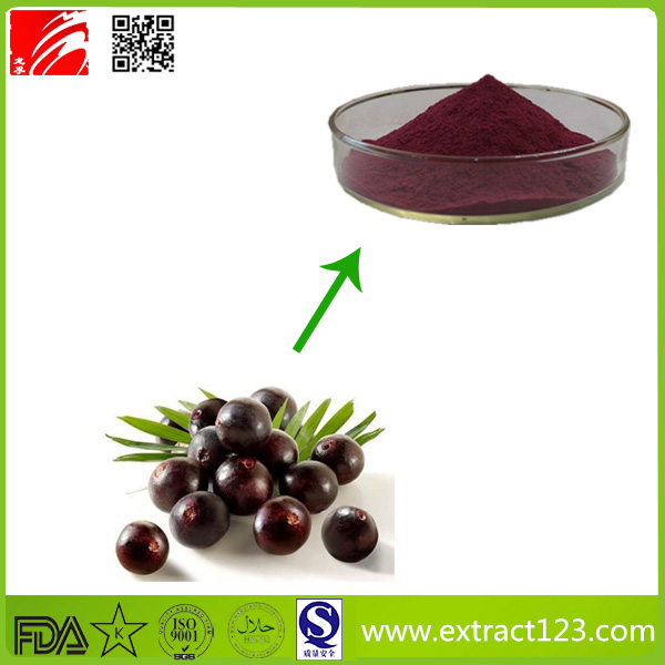 Factory Supply Acai Berry Frozen Pulp Powder with The Best Price