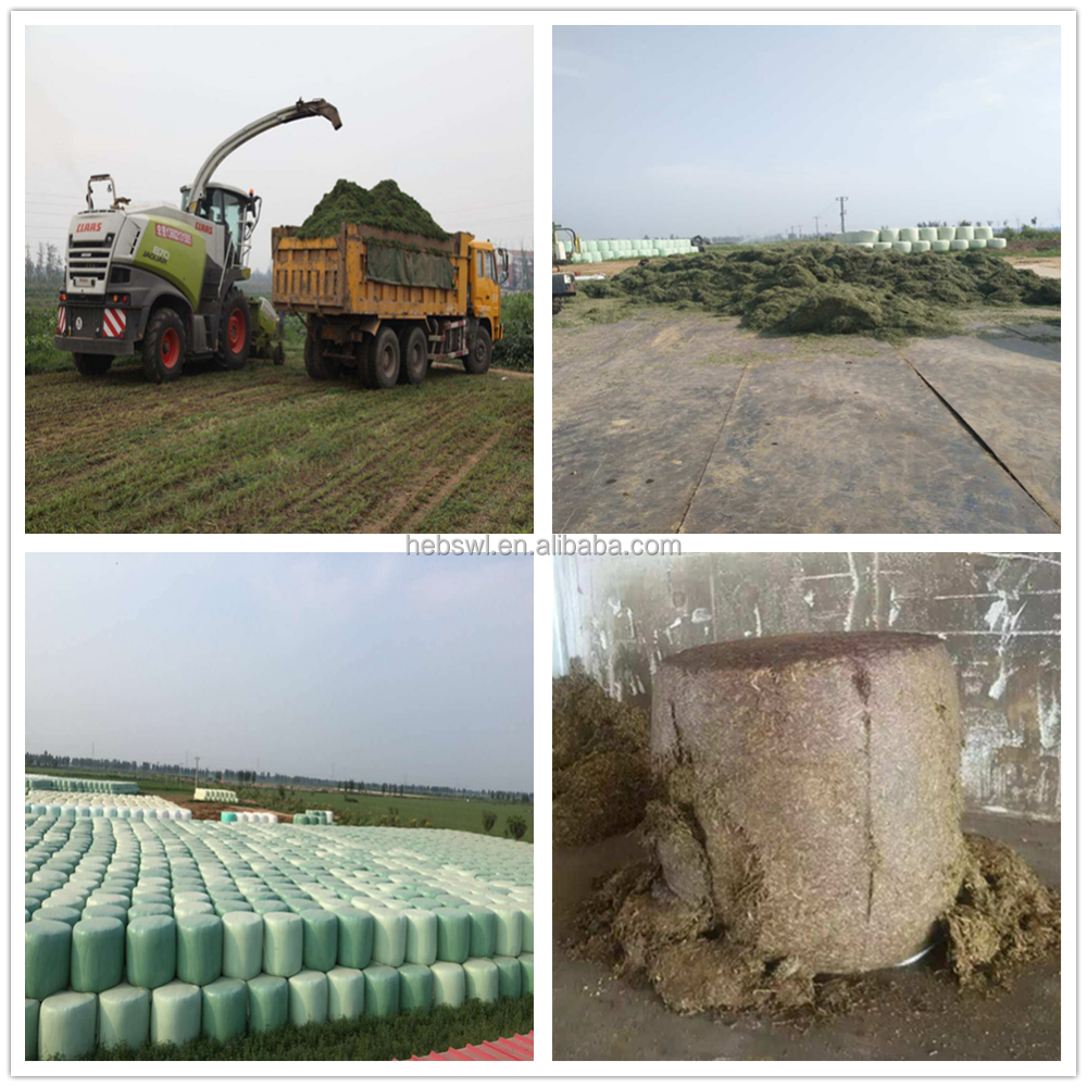 alfalfa silage animal feed for cow cattle and sheep