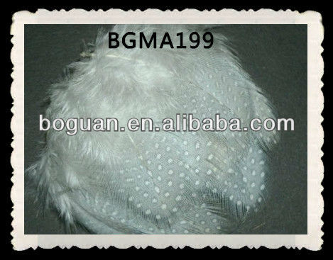 Real Grey Guinea Fowl Feather For Sale