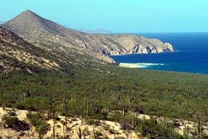 Mexico Oceanfront Real Estate, Mexico Beachfront Land For Sale