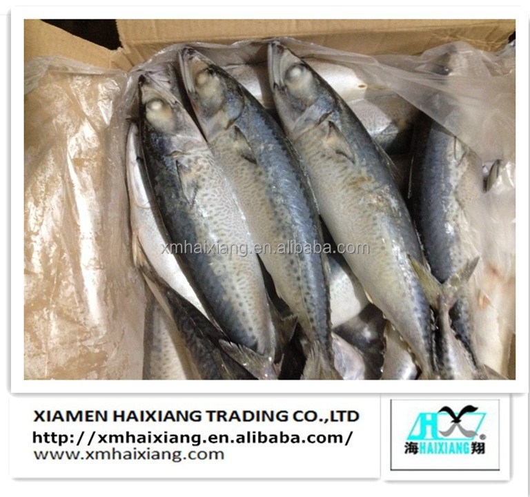 Chinese Frozen Pacific Mackerel Fish Supplier