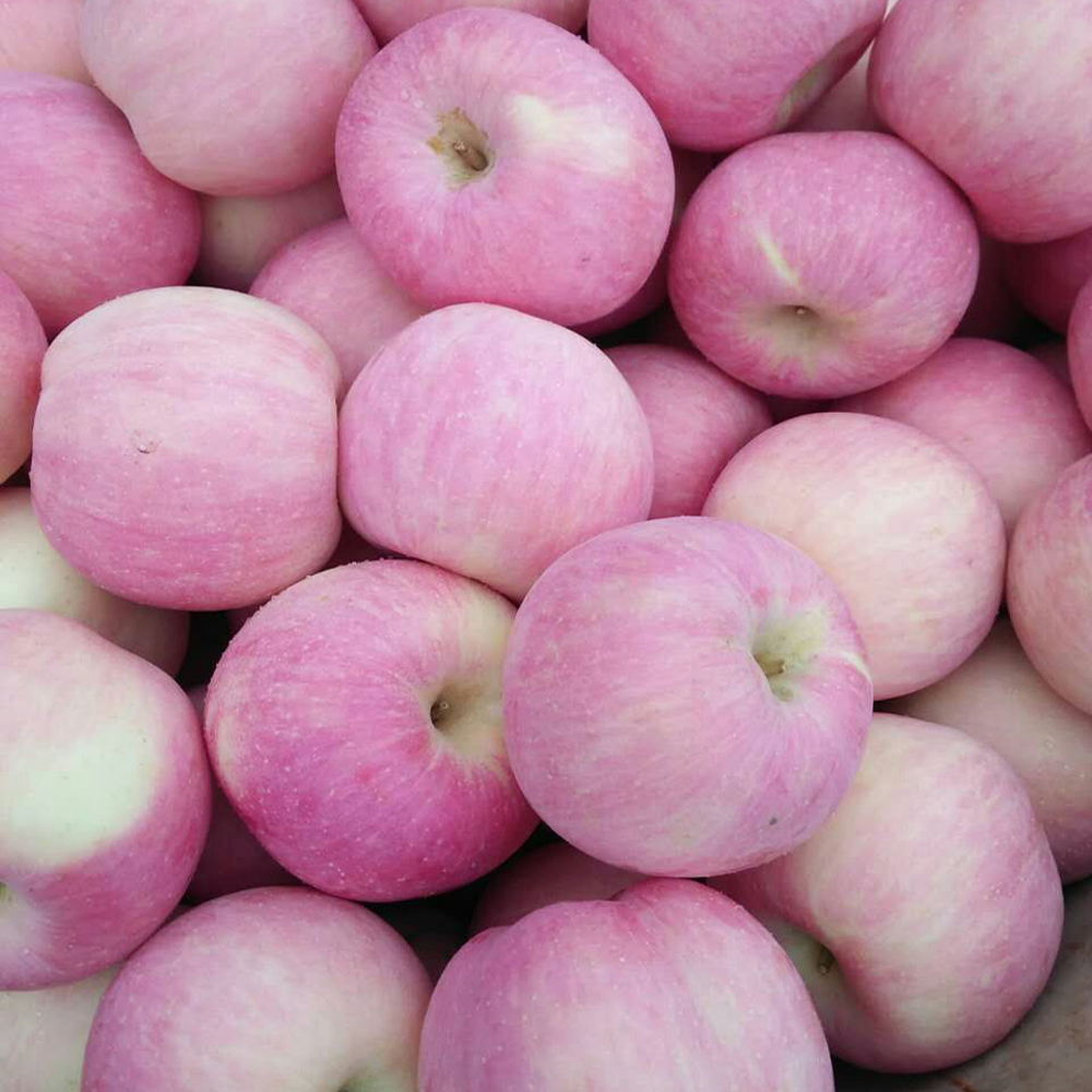 apple within 18kg carton fuji apples from jining Greenland all kinds of apple