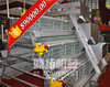 Design automatic equipment A type hot galvanized automatic design chicken cage for broilers and baby chicks