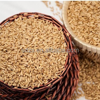 Canada foods hulled oats for rolling oatmeal naked oats for sale
