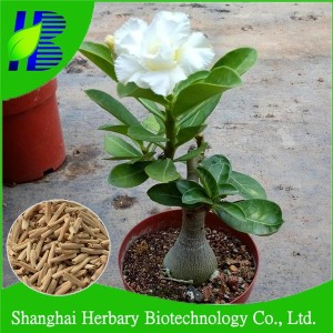 Bonsai Adenium Plant, Bonsai Adenium Plant Suppliers and