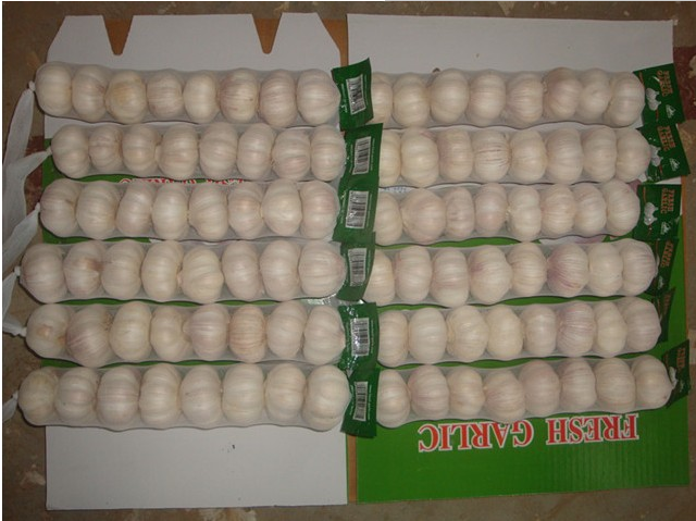 2016 New Crop high quality fresh pure white garlic or normal white garlic