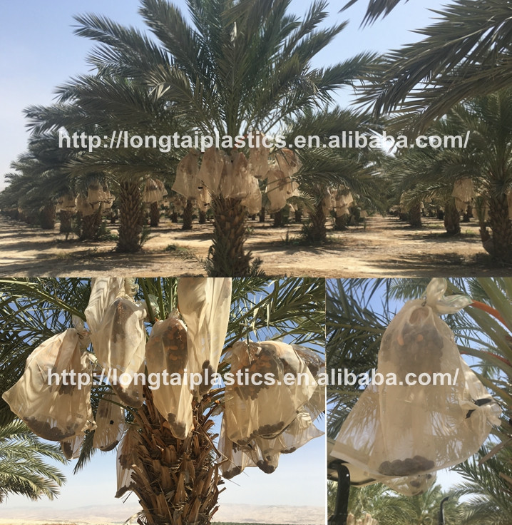 Palm harvest Date mesh bag