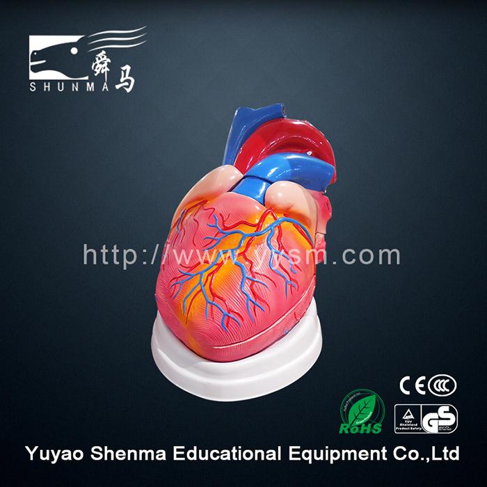 3d Modelo De Anatomía Humana Ventanilla Proveedor Cuerpo Humano 3d ...