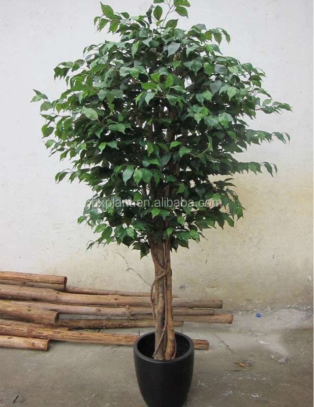 Archaistic Ficus Trees With White Color,Banyan Bonsai Tree On Sale ...