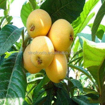 Pi pa zhong zi hot sale high germination Loquat Seeds with Loquat Price