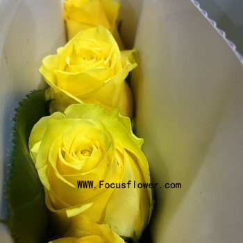 Environment-friendly Wholesale Preserved Roses Fresh Jasmine ...