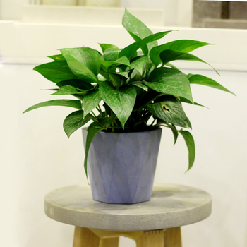 skillful design plant pots cheap. cement flower pots designs geometric concrete decorative vase for sale  making skillful planters notebuc com