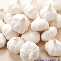 2019 Factory supply high quality fresh natural garlic price for sale !