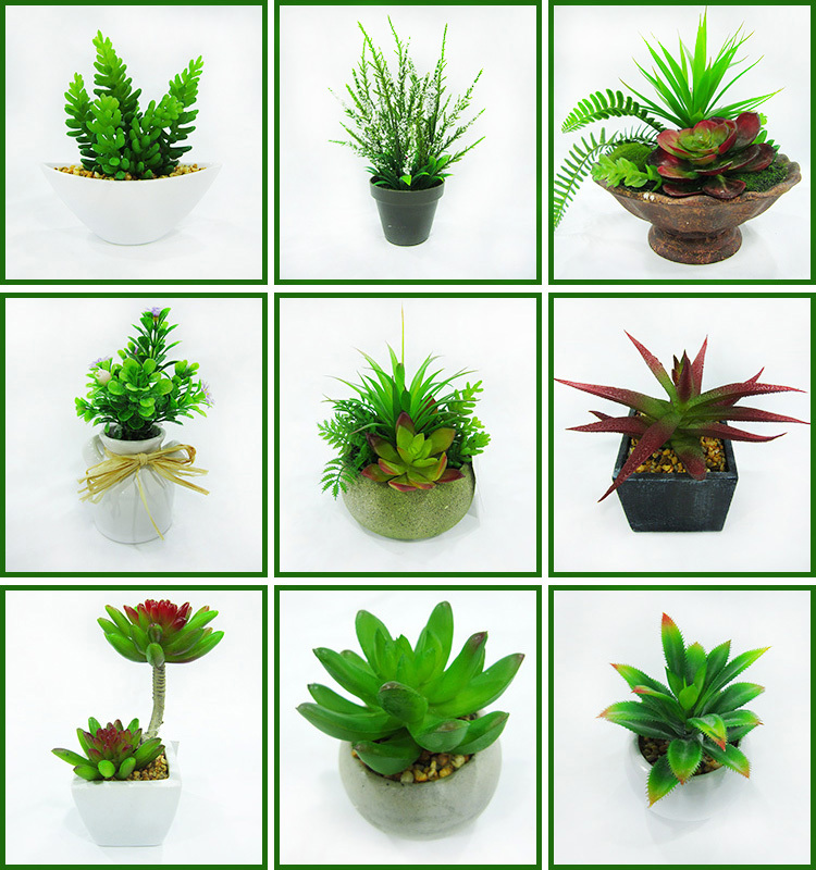 Wholesale Small Indoor Colored Succulent Cactus Plants