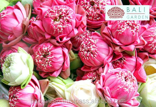 Fresh Cut Lotus Flowers Indian Wedding Style