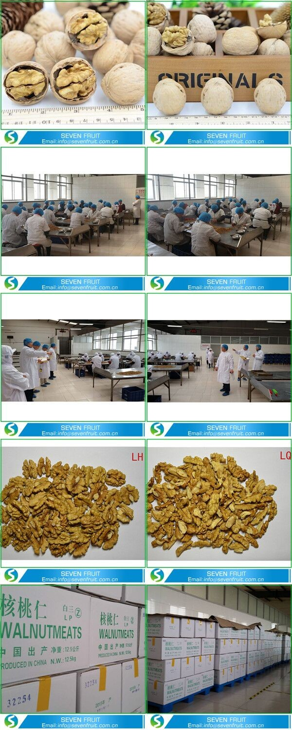 Chinese Highest Selling Agricultural Product Bulk Walnuts In Shell ...