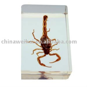 acrylic paper weight/acrylic block/insect acrylic block