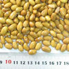 2016 cheap price agriculture kind Long Yellow Kidney Bean