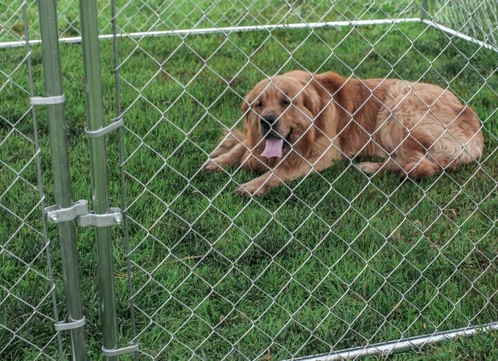 Portable Dog Kennels At Lowe S : Chain link double dog kennel lowes building