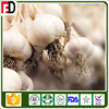fresh first grade garlic normal white and pure white natural farmland