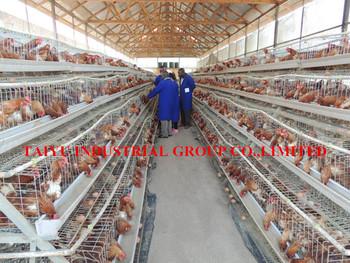 Design Modern Type Chicken Egg Farm Building Poultry Farming In Kenya Supplier