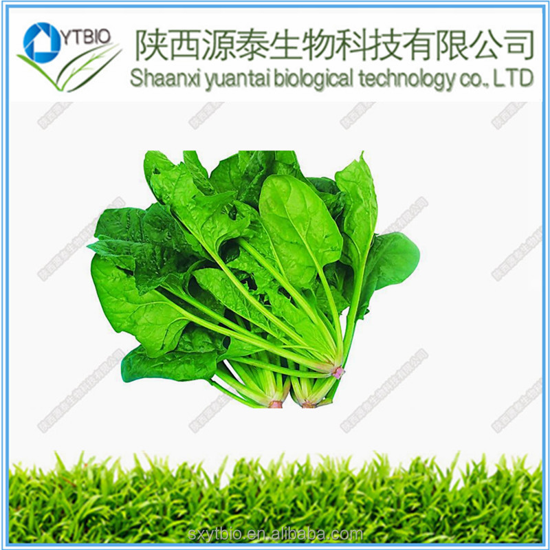 100% Natural Supplement Dry Spinach Powder Spinach Leaf Extract /Spinach Juice Powder