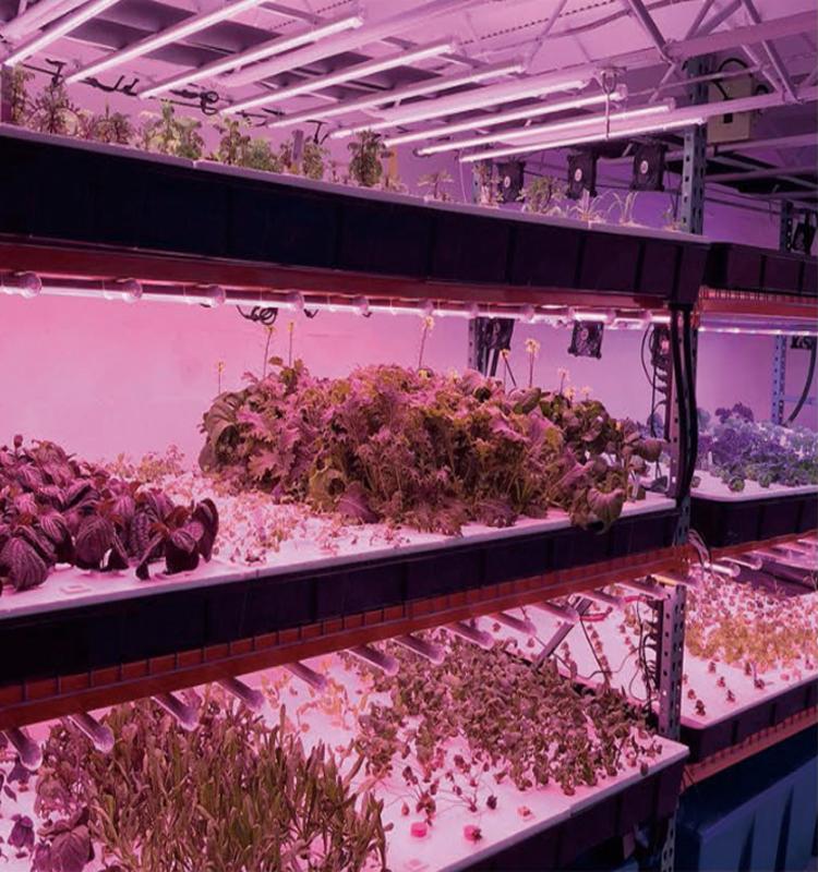 Medical Plant Growth Full spectrum king led grow light สำหรับ microgreens