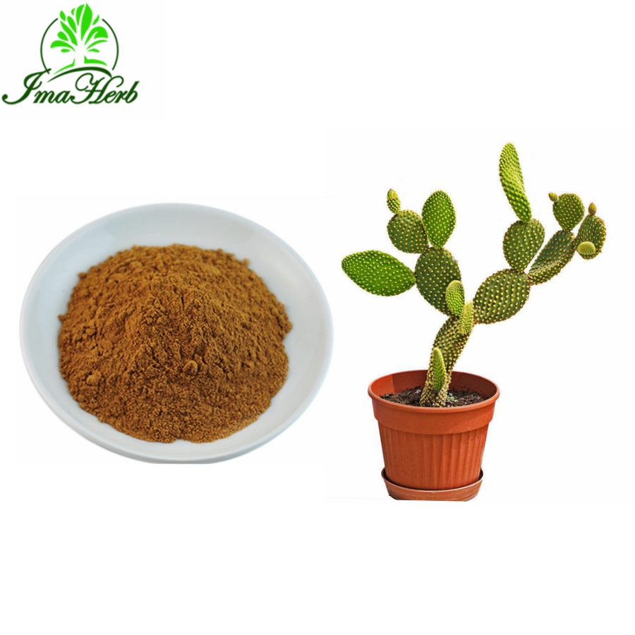 Factory Supply Nature Cactus Hoodia Gordonii Extract Price Buy