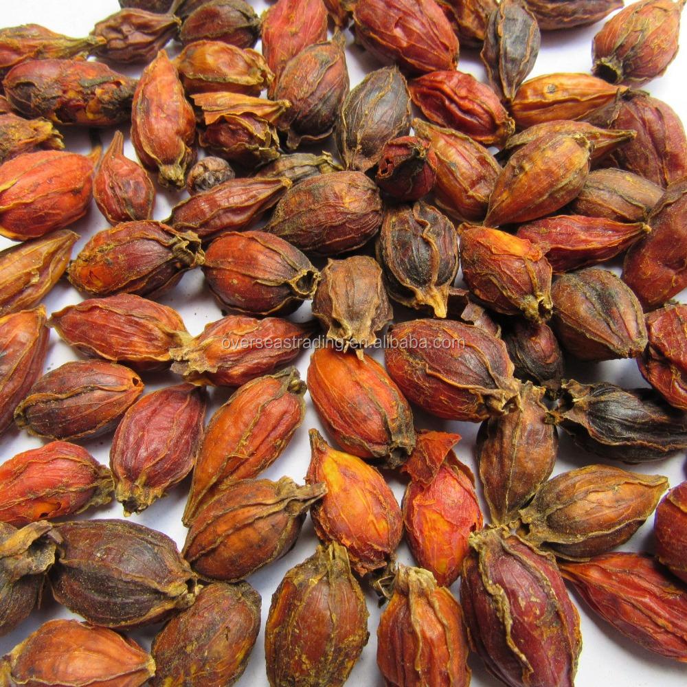 100 Natural Chinese Herb Gardenia Jasminoides Ellis Low Price Cape