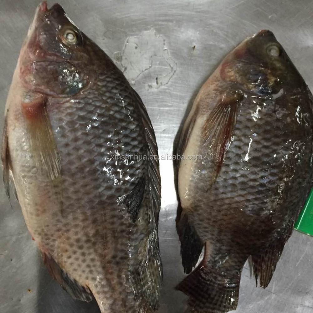 Cnf Lagos Tilapia Tilapia Fish Farming