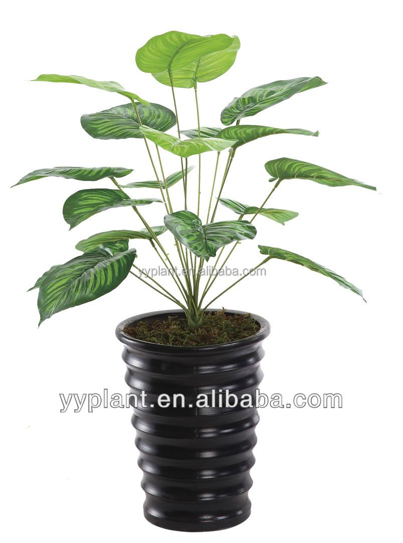 grossiste bonsai pas cher acheter les meilleurs bonsai pas cher lots de la chine bonsai pas cher. Black Bedroom Furniture Sets. Home Design Ideas