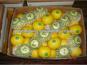Fresh Lemon in China