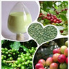 Green Coffee bean extract Chlorogenic acid 30%-98%