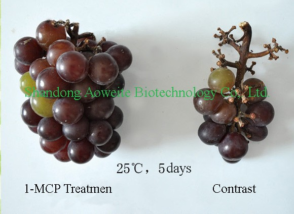 1-methylcyclopropene, 1-mcp 3.5% wp, 1-mcp for fruit perservative Fresh Keeping Agent
