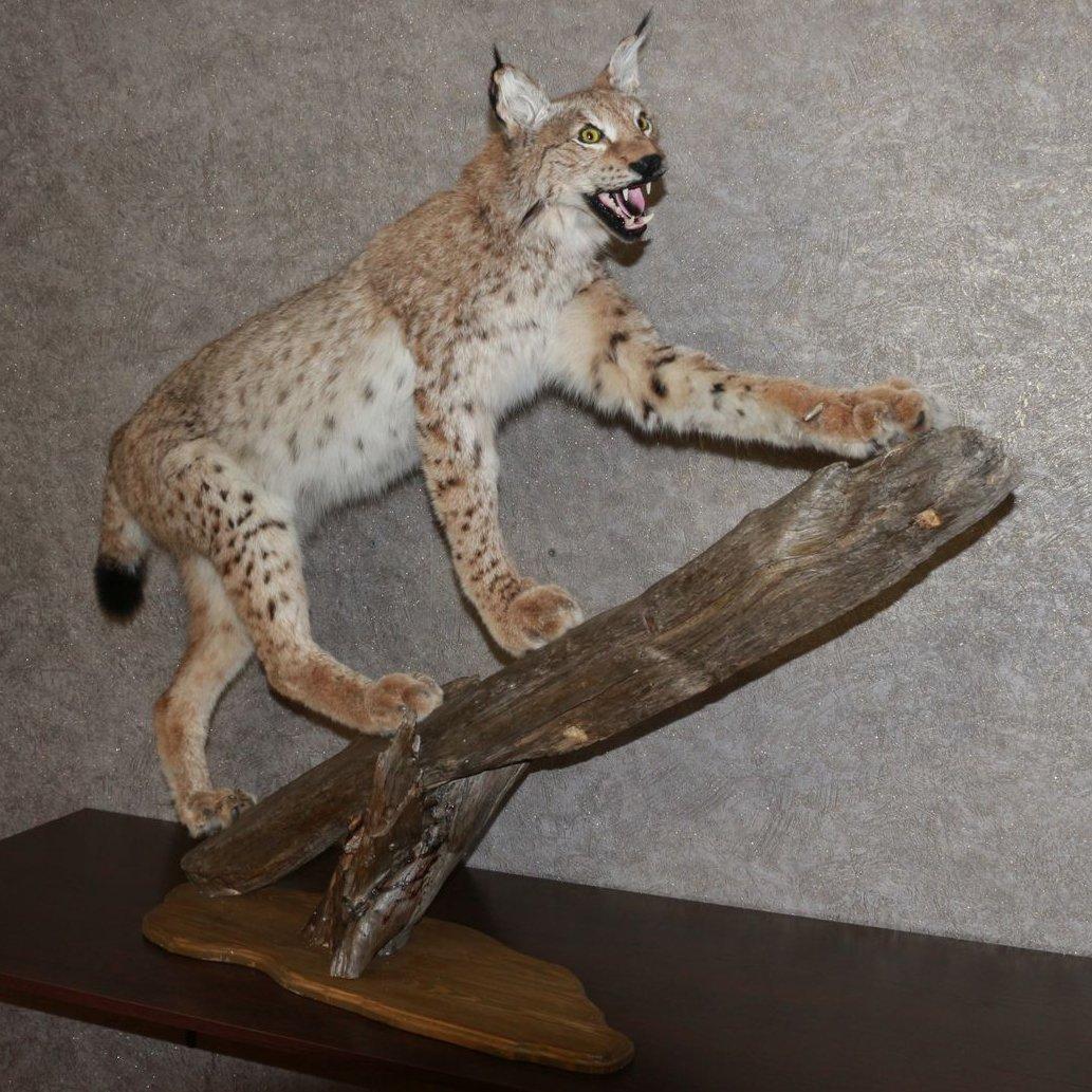 EURASIAN LYNX - TAXIDERMY MOUNT, STUFFED ANIMAL FOR SALE - NOT BOBCAT