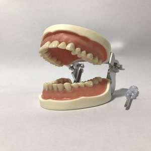 Dental 28 pcs of Teeth Model for Dental Practice use Removable Teeth Model