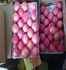 buy fresh apple fruit fuji apple in bulk wholesale apple fruit