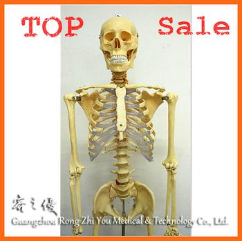 R020103 170 Cm Cuerpo Humano Transparente Costillas Esqueleto Modelo ...