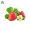 Natural Flavor Extract