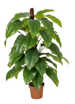 Guangzhou Verdor Planta Jardín Scindapsus Aureus Artificial Epipremnum Aureum