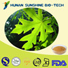 Solvent Extraction Leaf Part Used Papaya Leaf P.E.