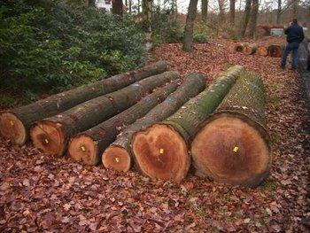 Red And White Oak Logs Buy Oak Veneer Logs Product On