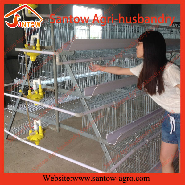 Automatic Feeding System Chicken Cage / Layer Cage