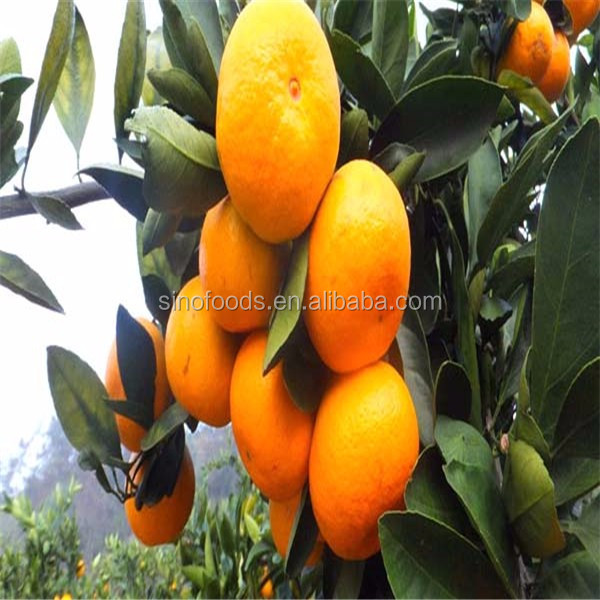 2017 China hot sale new best seeds price orange seeds