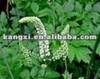 100% nature Black Cohosh plant Extract