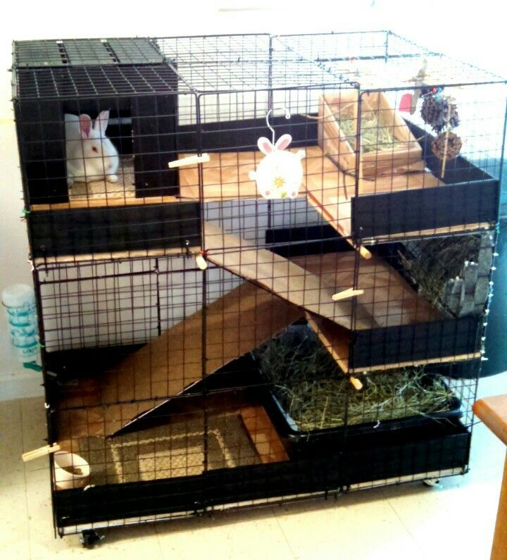 Professional rabbit farming cage popular iso certification for Diy playpen for guinea pigs